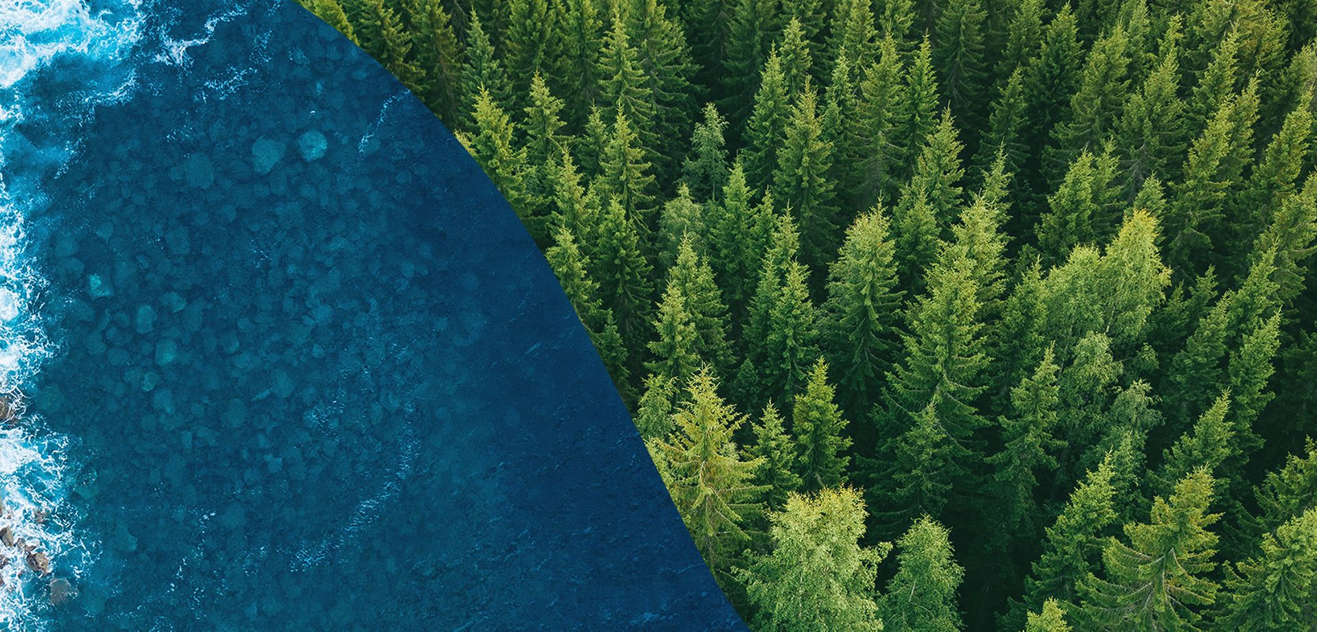 Convertus Header image of water and trees